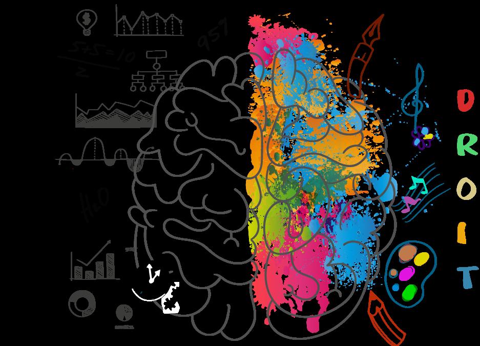 Le cerveau et sa composition (notamment en graisses)