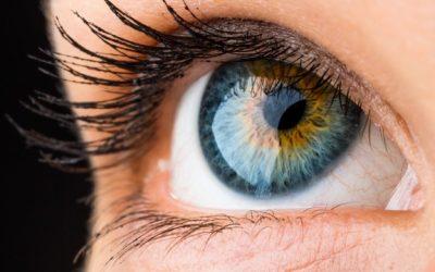 L'oeil, un organe à chouchouter de près