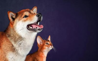 Faut-il donner des Oméga-3 à nos animaux ?