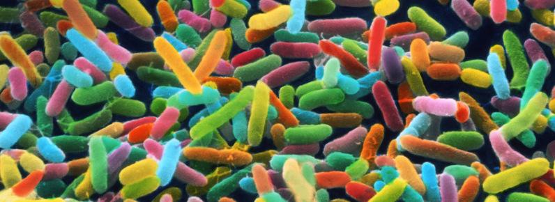 Oméga 3 et microbiote intestinal