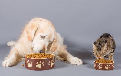 Des Oméga-3 pour la beauté des poils des chiens et des chats ?